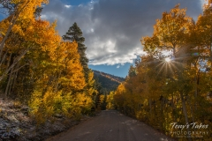 Fall colors on Boreas Pass