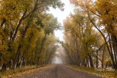 Foggy fall road