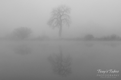 Foggy pond in black and white