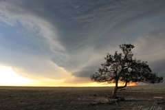 Lone tree weathers the storm