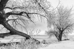 Hoar frost in black and white