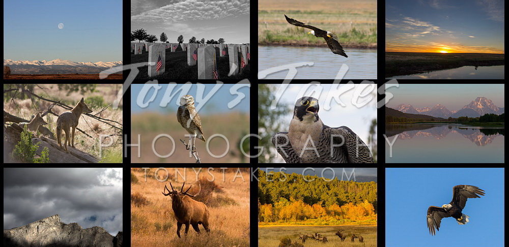 Tony's Takes Photography - Wildlife, landscape and extreme weather imagery.