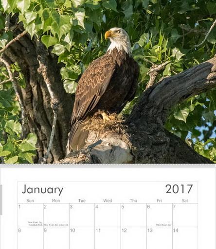 Bald Eagles 2017 Calendar