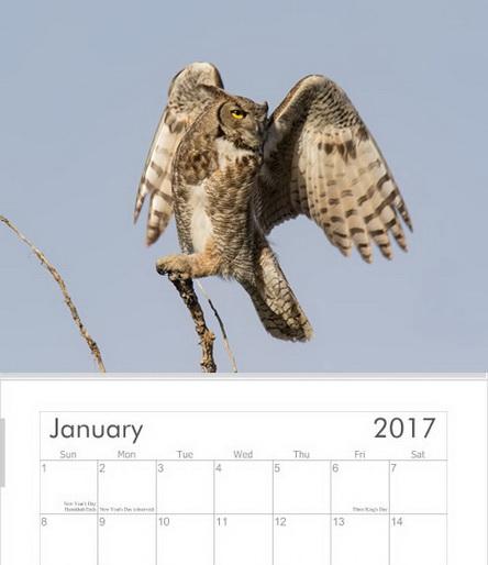Raptors Calendar 2017