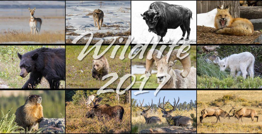 Wildlife 2017 Calendar