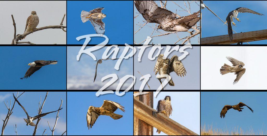 Raptors 2017 Calendar