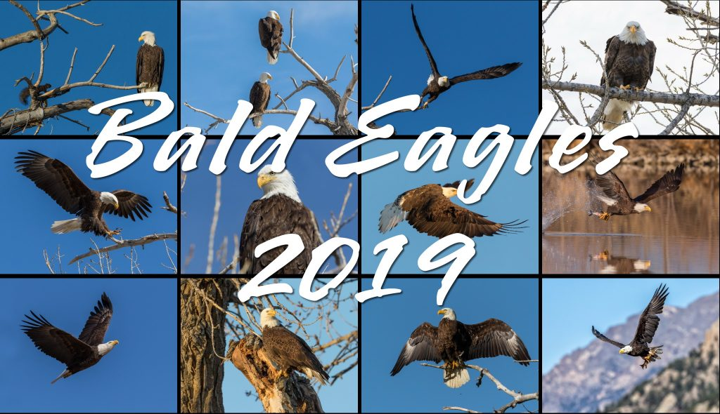 2019 Bald Eagles Calendar