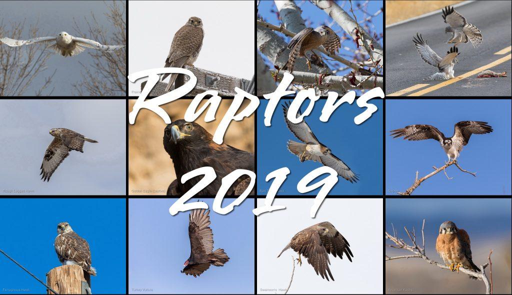 2019 Raptors Calendar