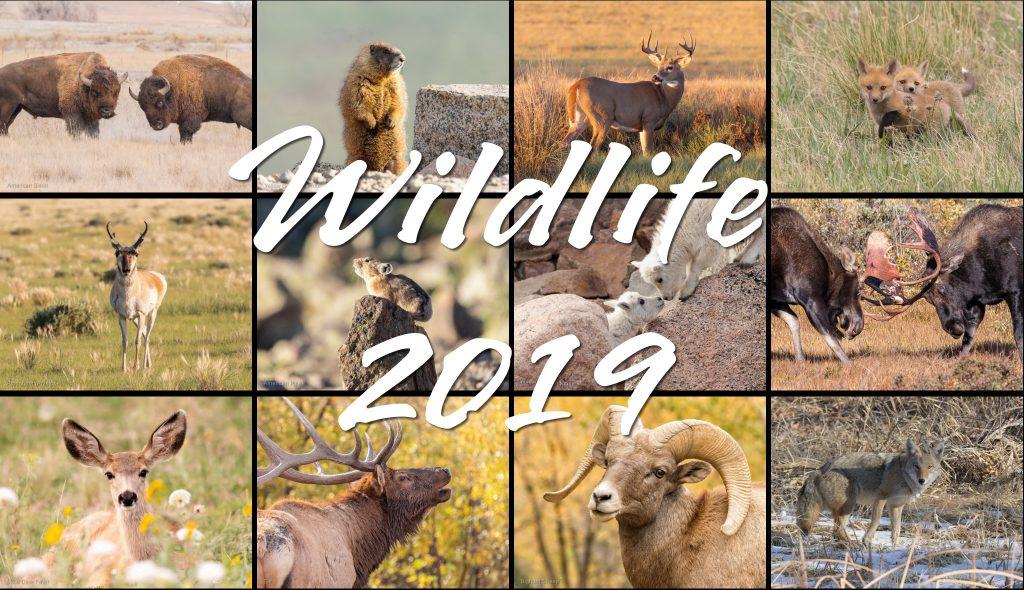 2019 Wildlife Calendar