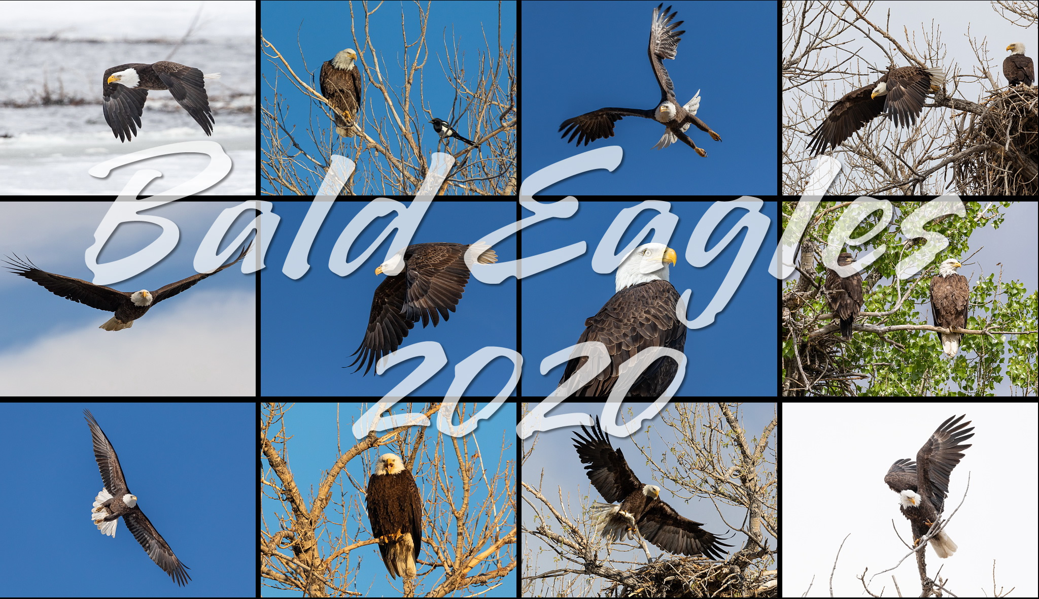 Bald Eagles 2020 Calendar
