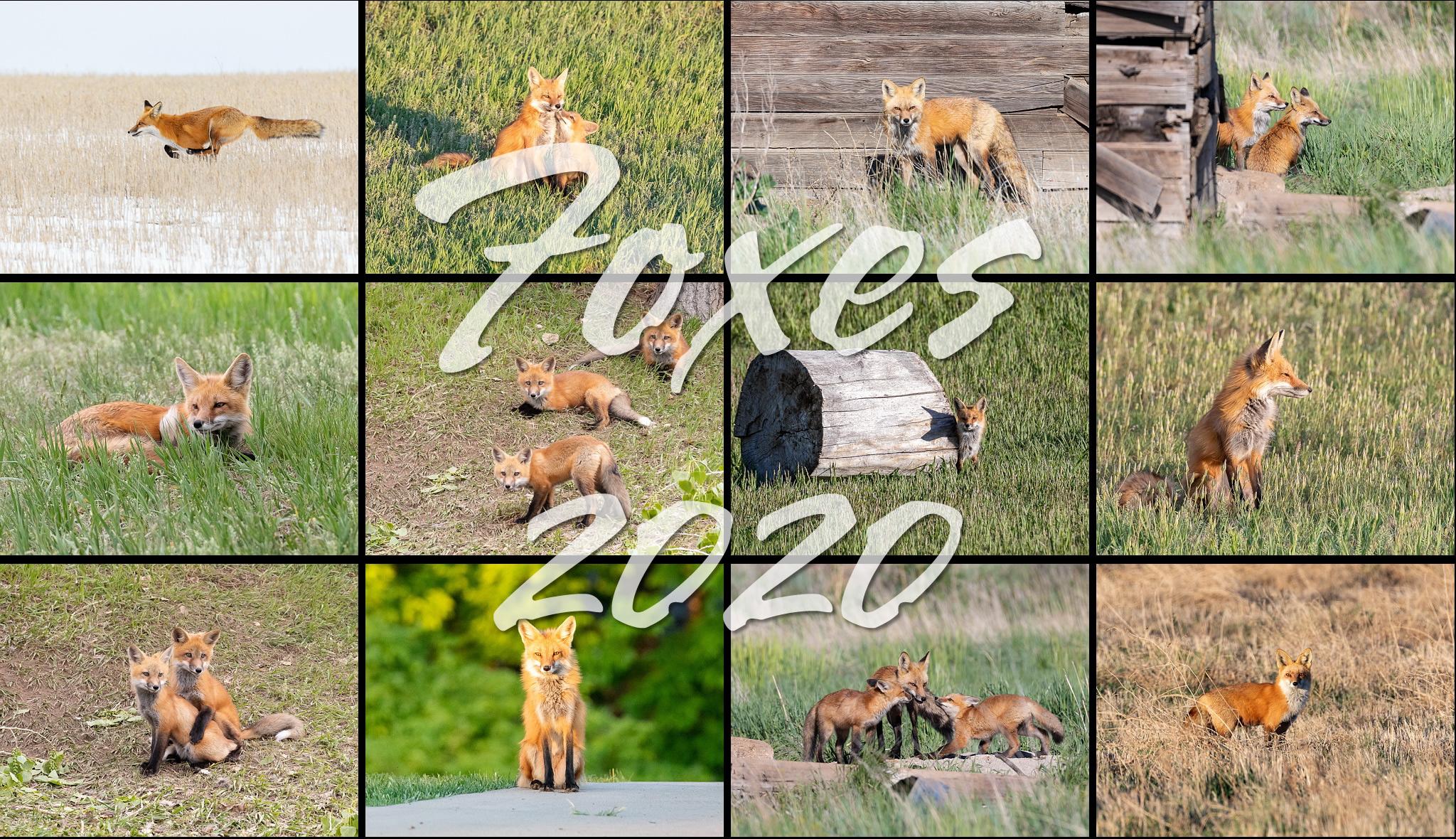 Foxes 2020 Calendar