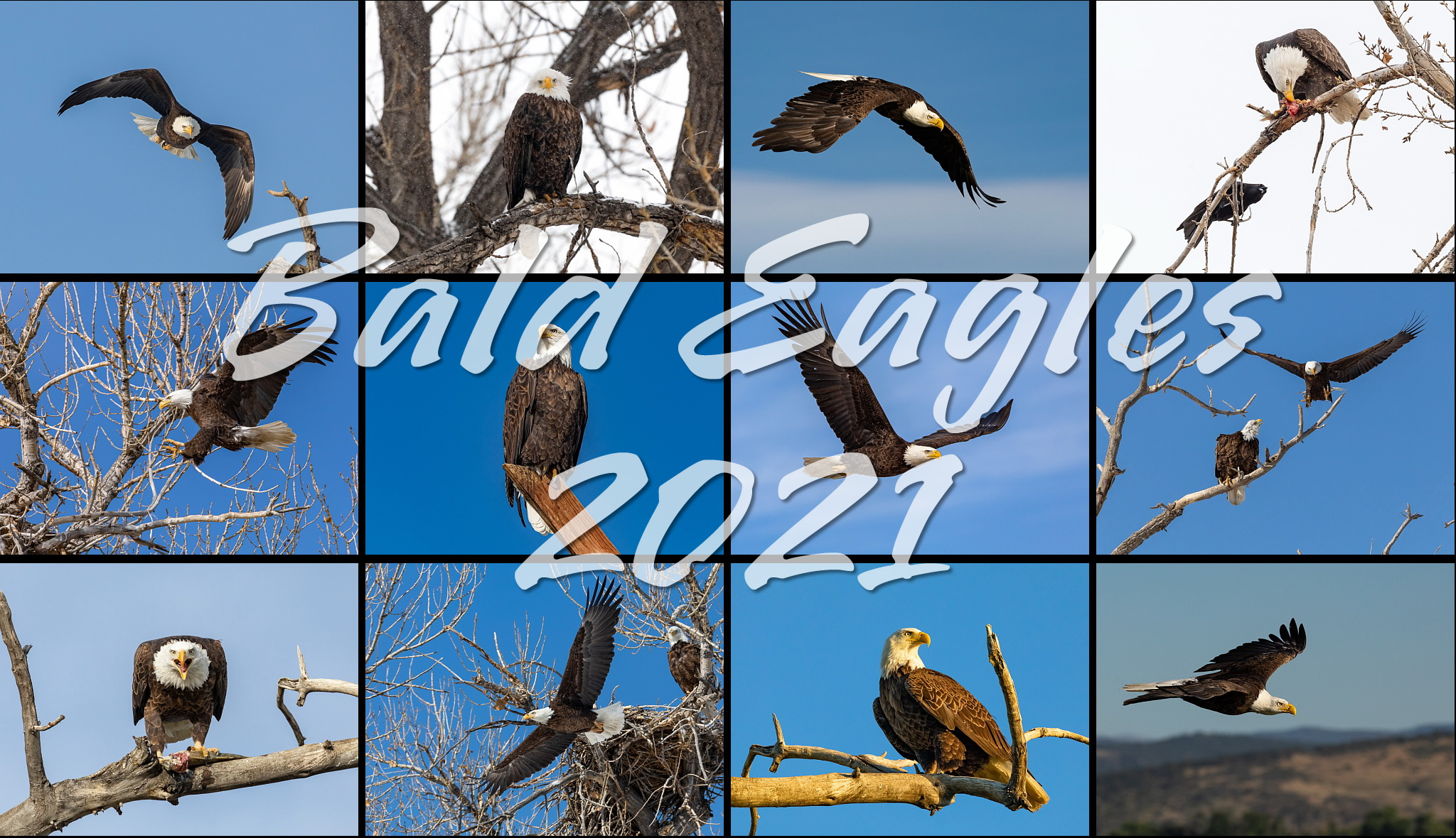 Bald Eagles 2021 Calendar