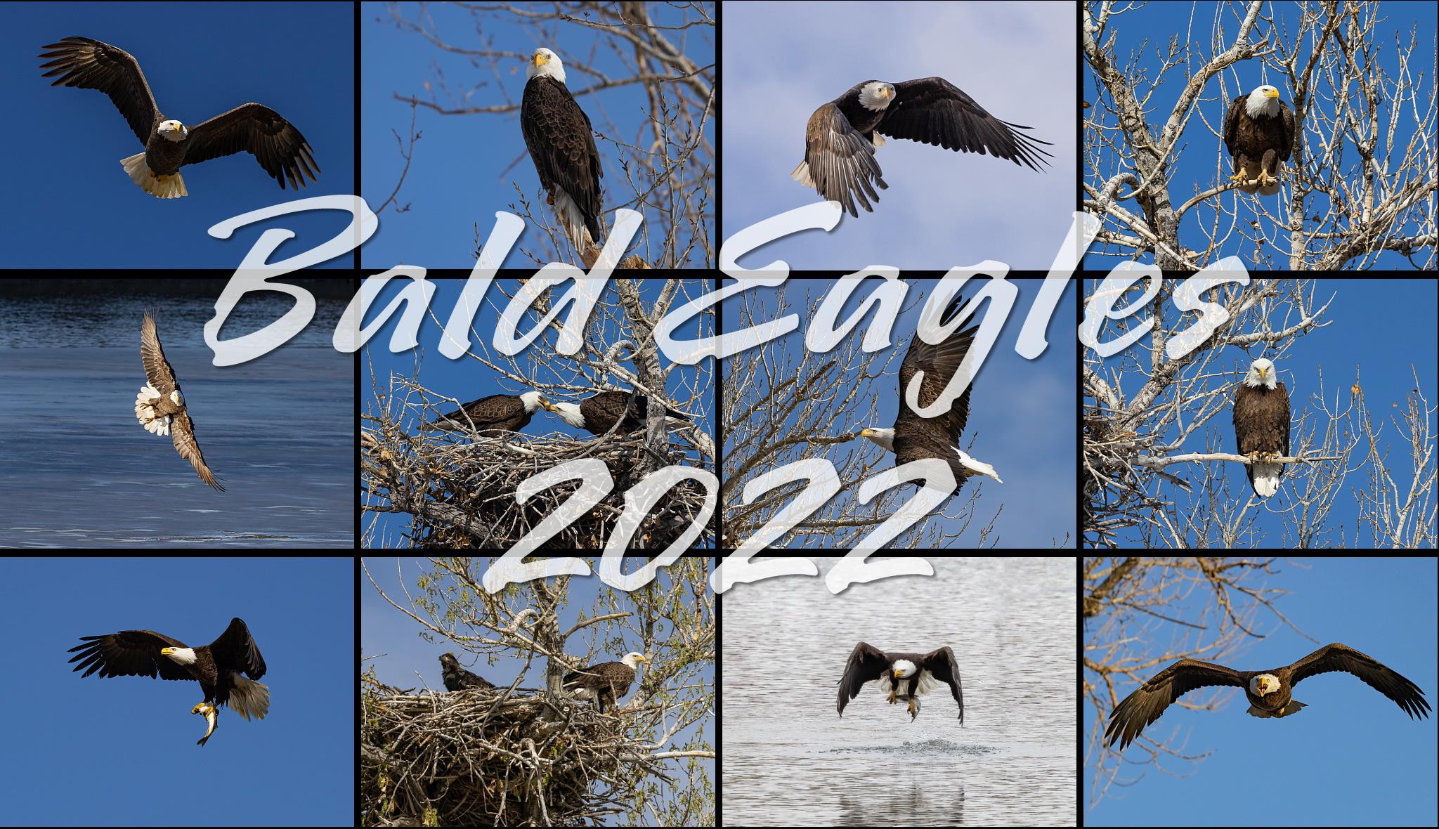 Bald eagles 2022 calendar