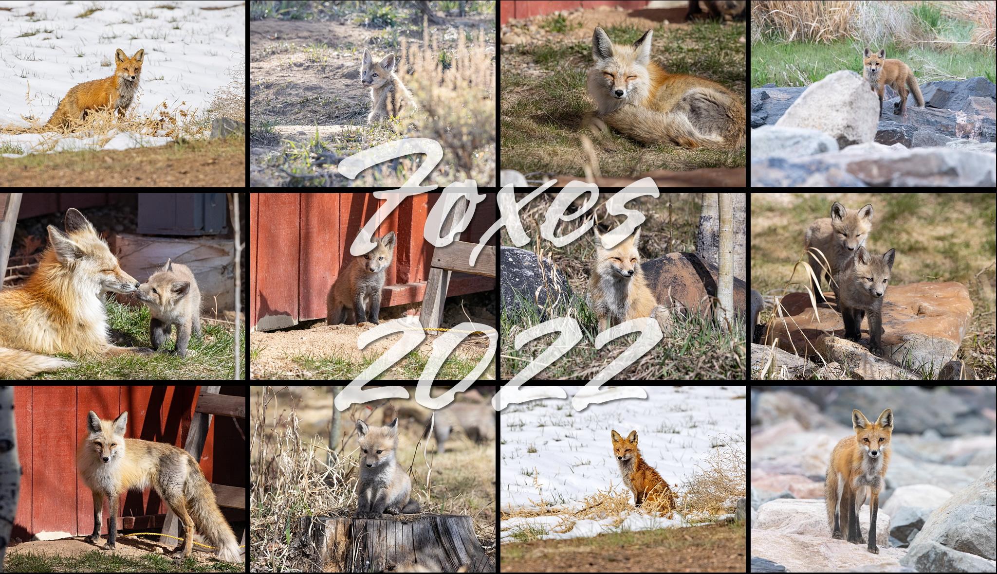 Foxes 2022 calendar