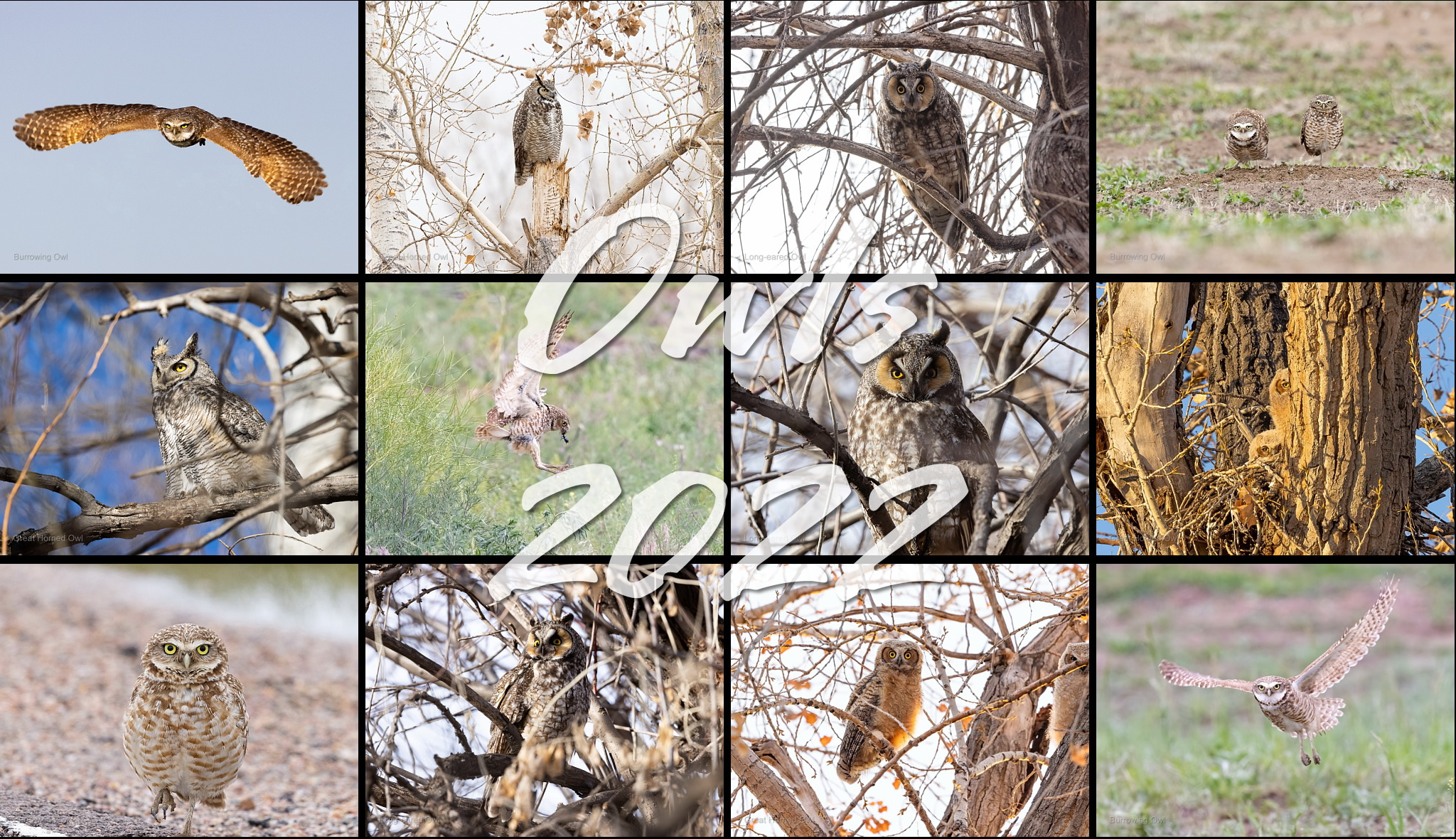 Owls 2022 calendar