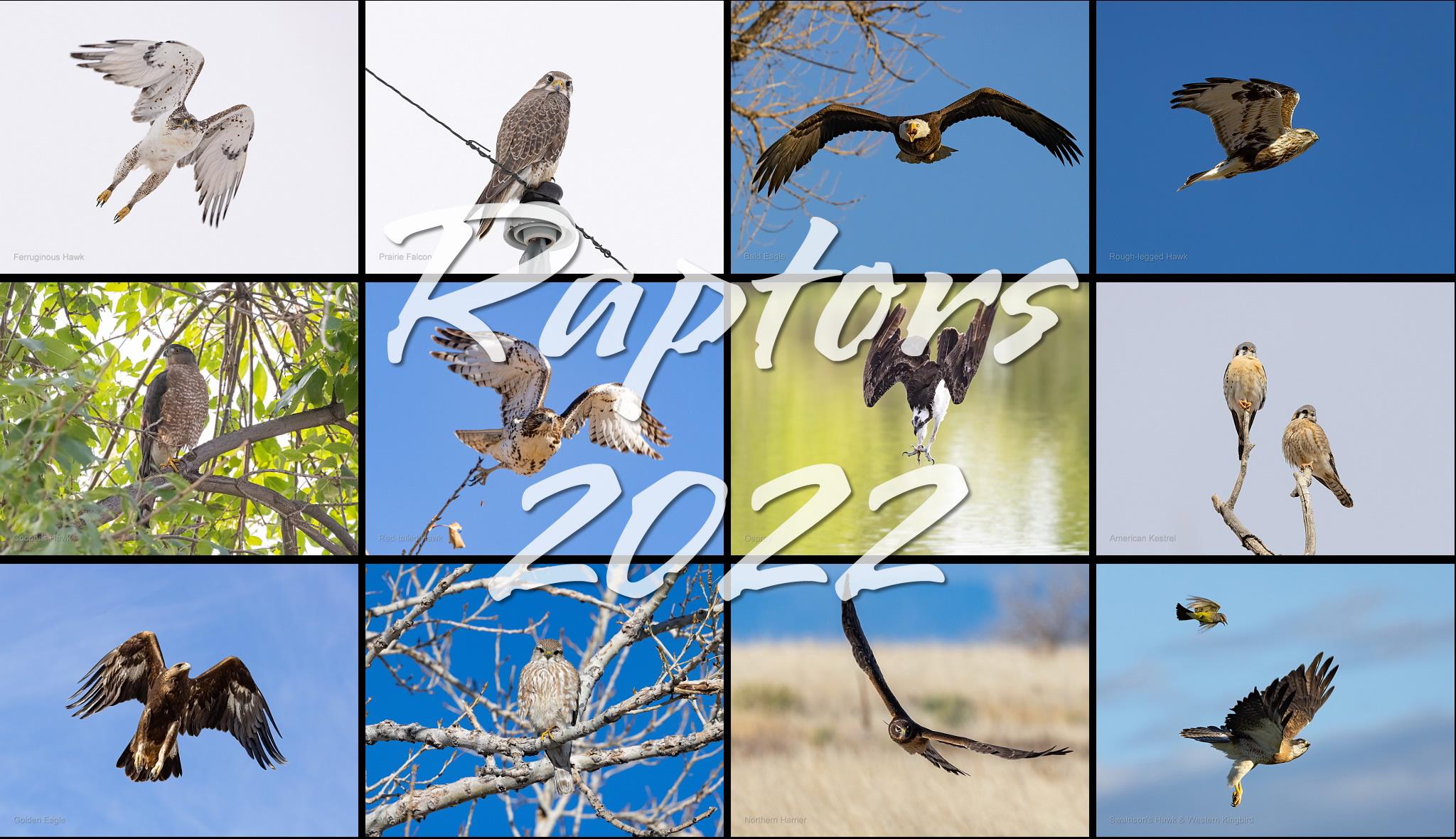 Raptors 2022 calendar
