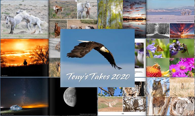 Tony's Takes Photography 2020 Photo Book